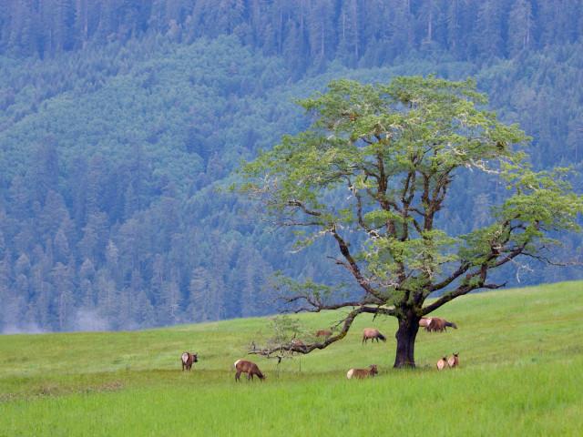 Nature 59.jpg