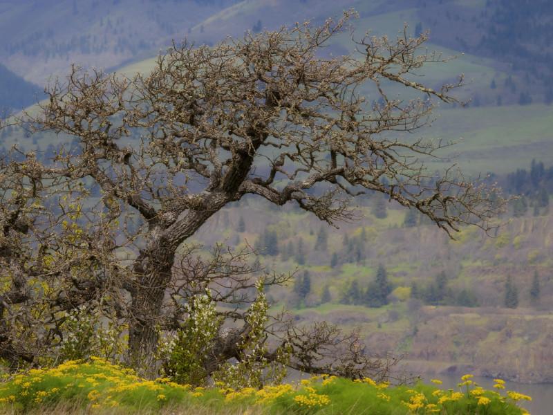 Nature 60.jpg