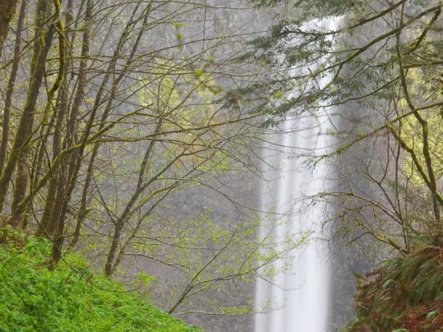 Nature 61.jpg