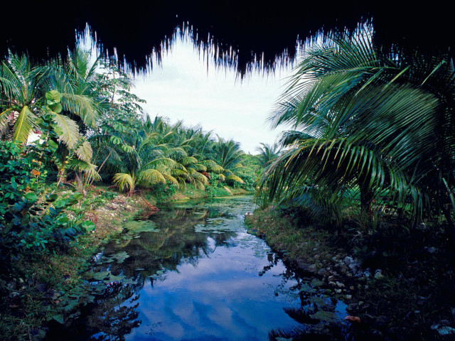Lush Nature Trees Stream
