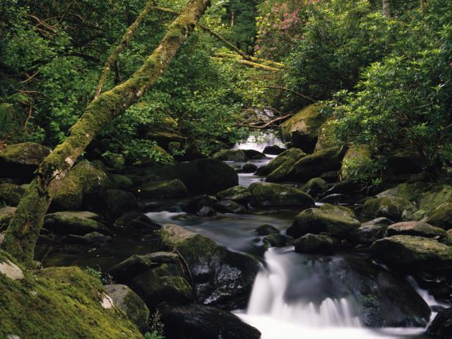 Nature 67.jpg