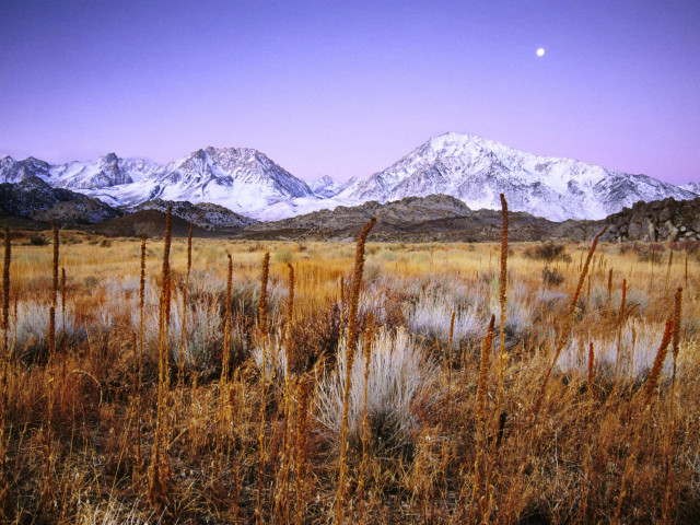 Landscape Of Meadow Below Snowy Peaks, Bishop, California