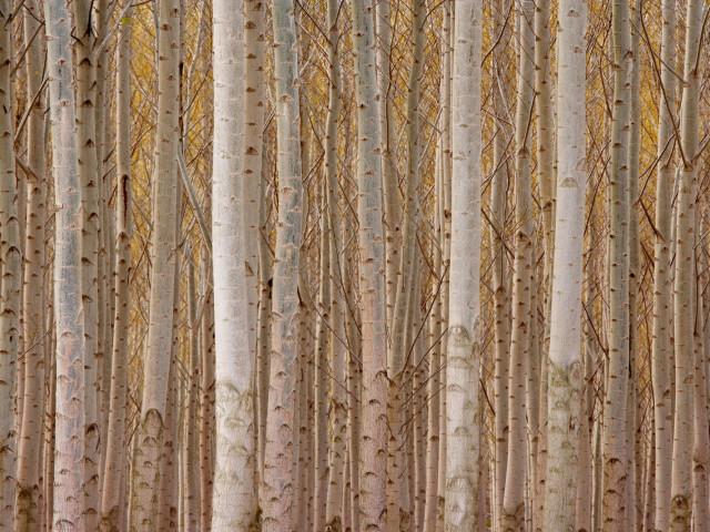 Nature 96.jpg