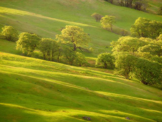 Nature 99.jpg