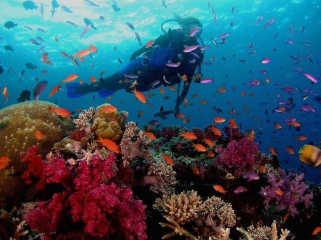 Scuba Diving Beqa Lagoon Fiji Wallpaper