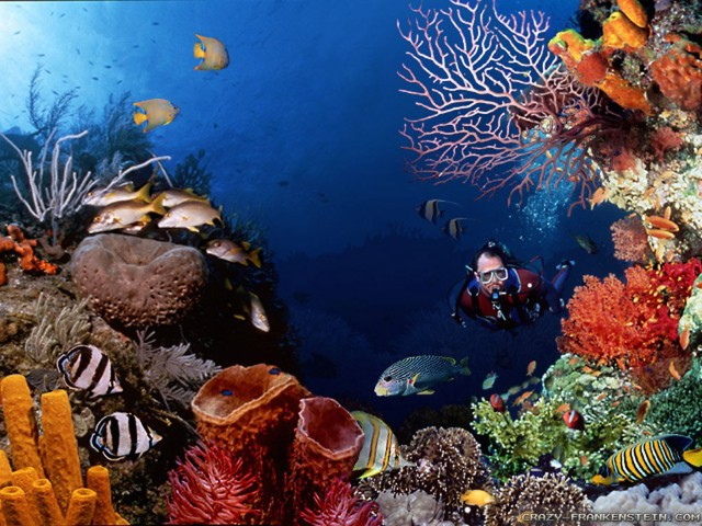 Scuba Diving Underwater Scene Wallpaper