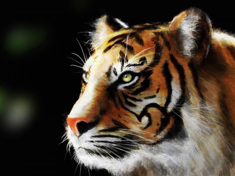 Tiger Eye Painting Wallpaper