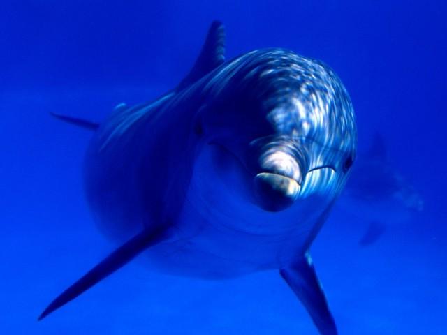 Aquatic Curiosity, Bottlenose Dolphin