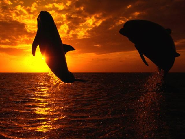 Aquatic Symphony