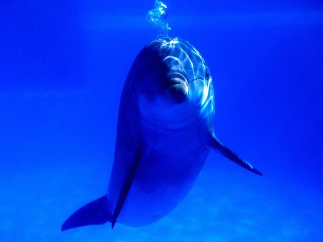 Bright Idea, Bottlenose Dolphin