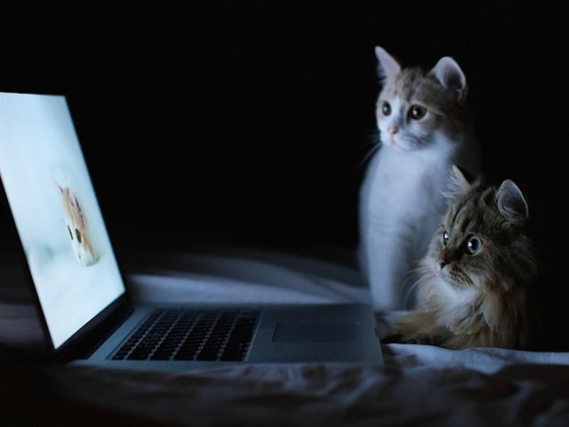 Computer Cats Wallpaper