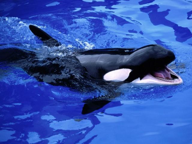 Feed Me!, Killer Whale