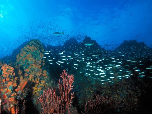 Los Roques Reef, Venezuela