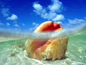 Sunken Treasure, Conch Shell, Bahamas