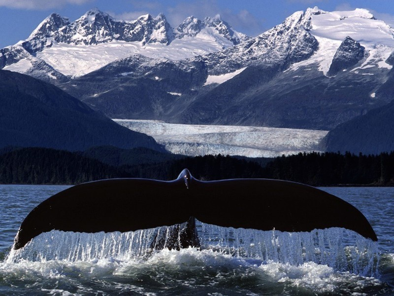Whale Tail Wallpaper