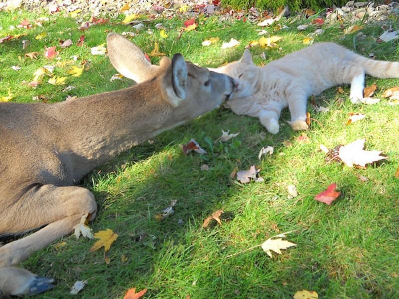 Cat Deer Kisses Wallpaper