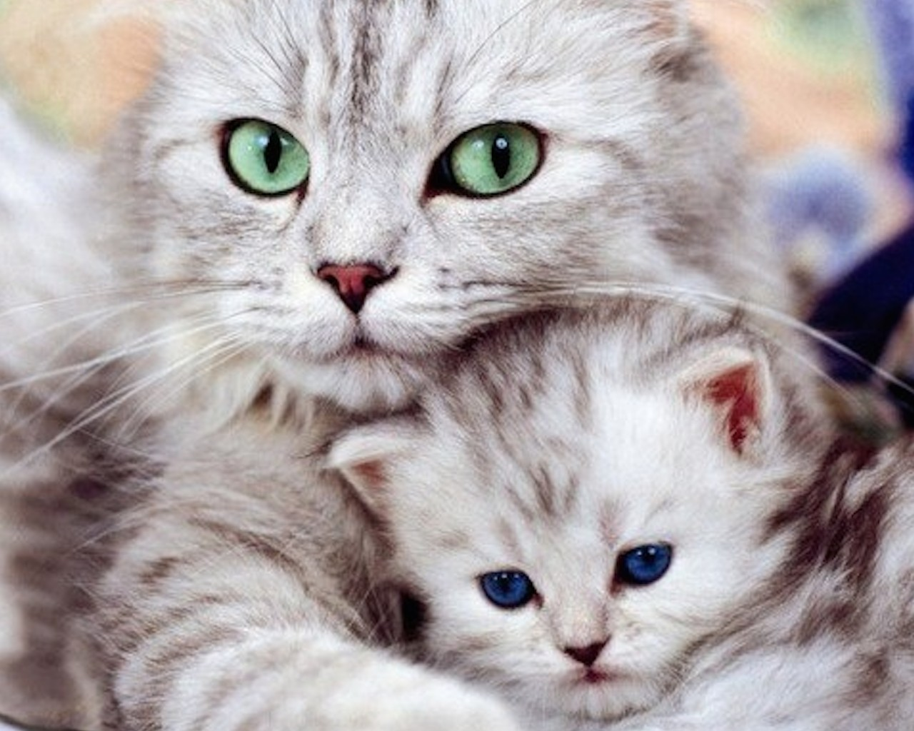 Cat Kitten Wallpaper-Free Animal Wallpaper