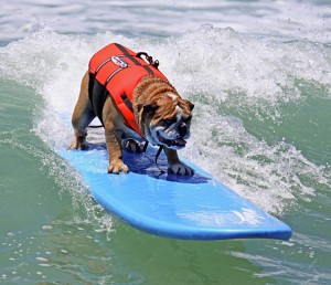 Dog Surfing Wallpaper