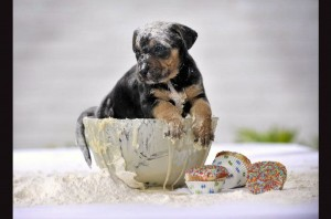 Yummy Dog Bowl Wallpaper