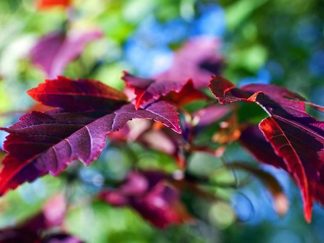 Autumn Leaf Wallpaper