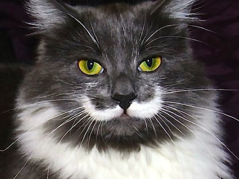 Cat Mustache Wallpaper