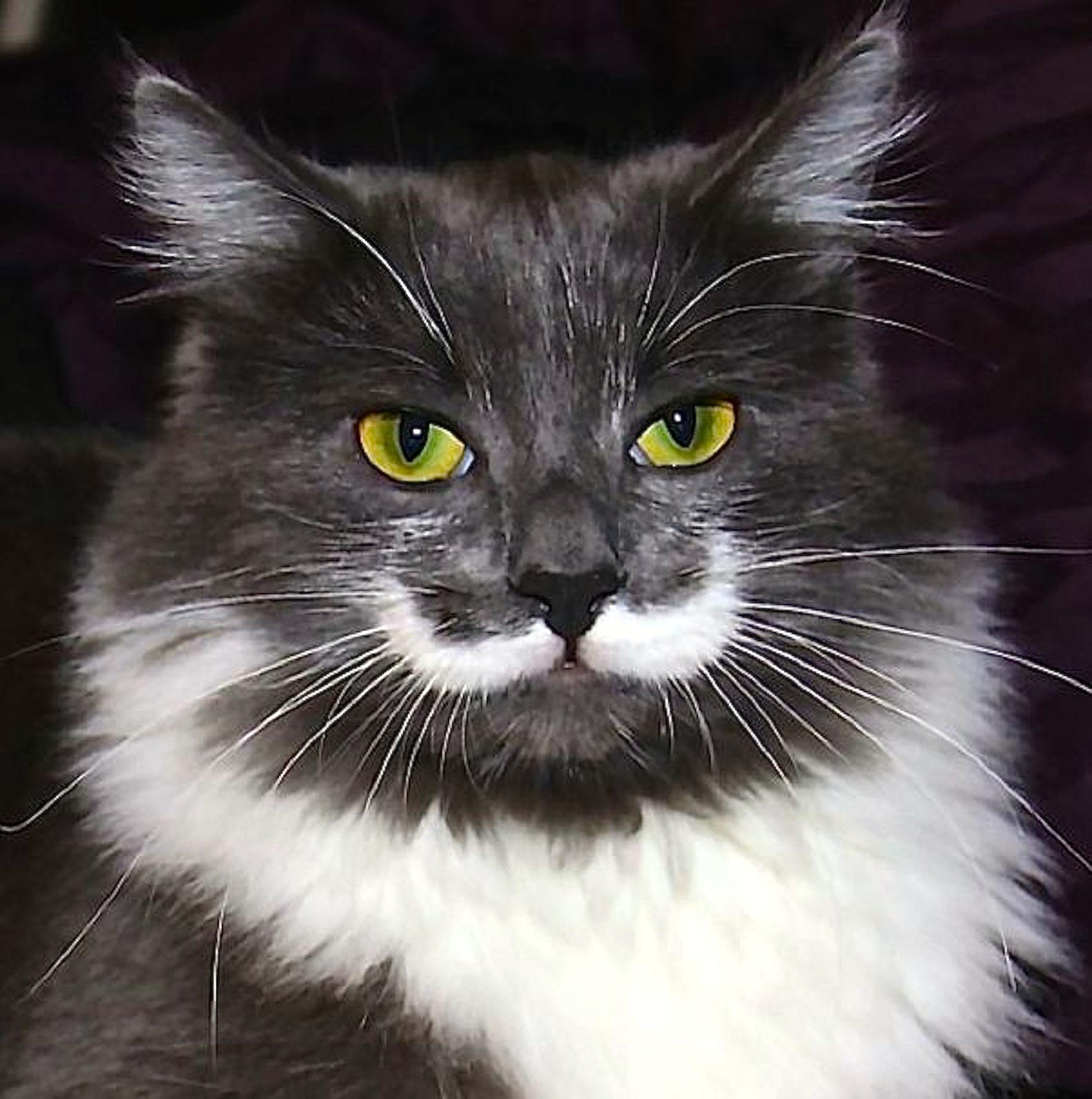 Cat Mustache Wallpaper-Free HD Animal Screen Savers