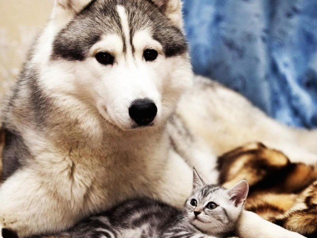 Dog Cat Cute Wallpaper