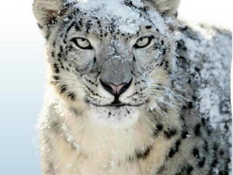 Hd Wallpapers Os X Snow Leopard Waves In Sea Wallpaper