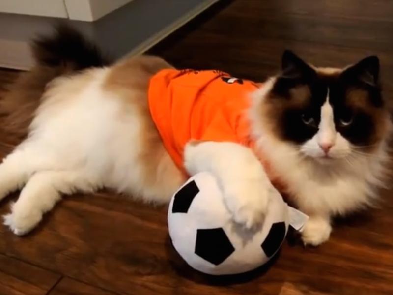 Cat Soccer Fan Wallpaper