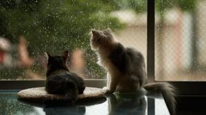 Cats Watching Raindrops Wallpaper