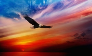 Eagle Soaring Wallpaper