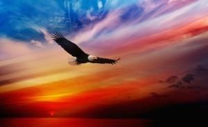 Eagle Soaring Wallpaper