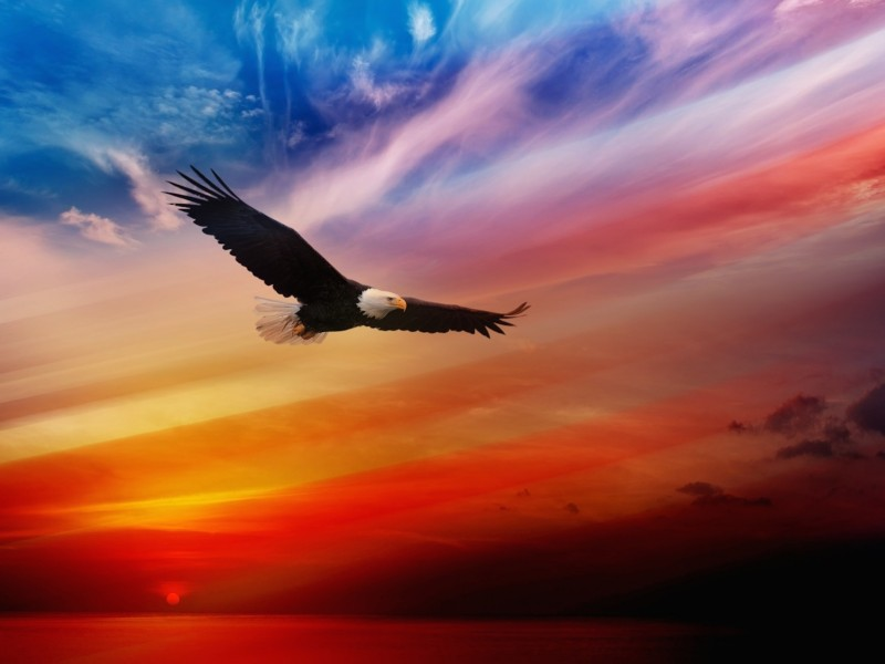 Eagle Soaring Wallpaper  Cool Wallpapers HD Backgrounds
