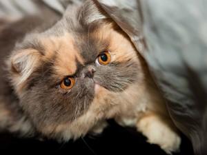 Cute Congeniality Cat Wallpaper