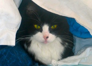Cat Snuggled Wallpaper