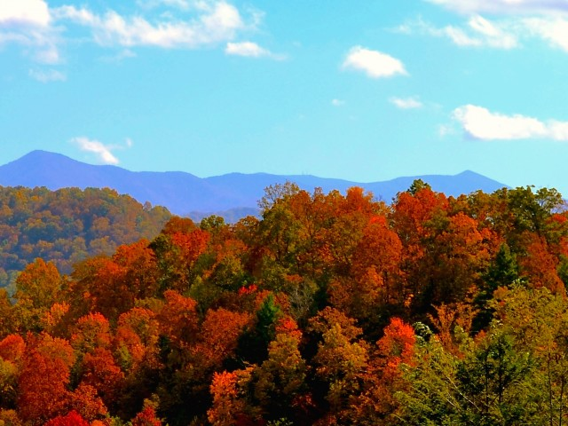 Fall Colors North Carolina Mountains Wallpaper