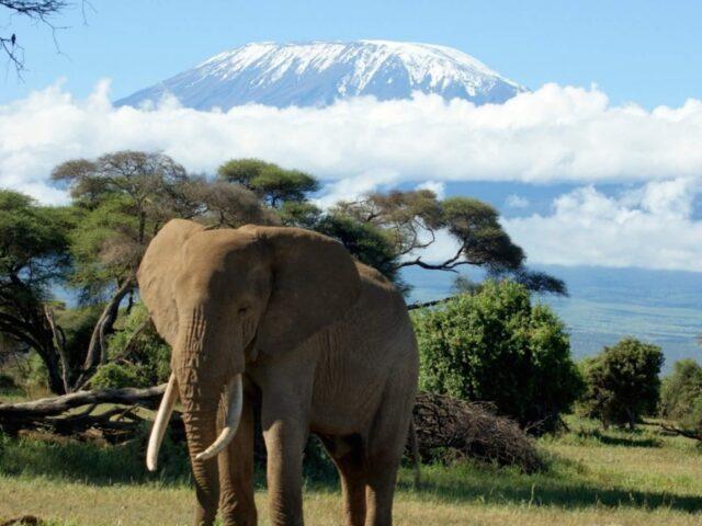 Mount Kilimanjaro Safari Wallpaper
