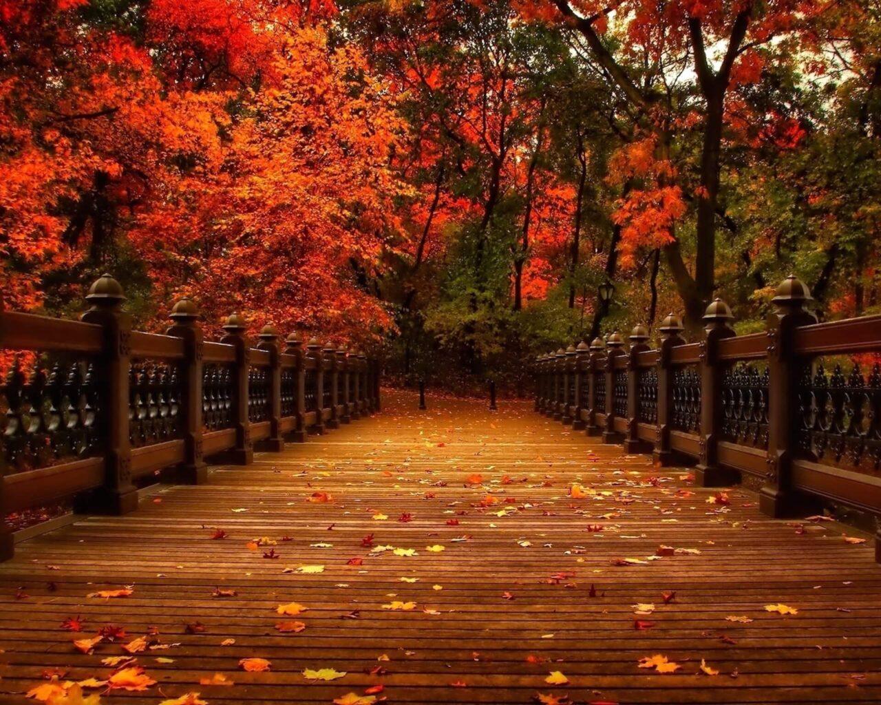 Autumn Park Bridge Wallpaper Free Autumn Downloads