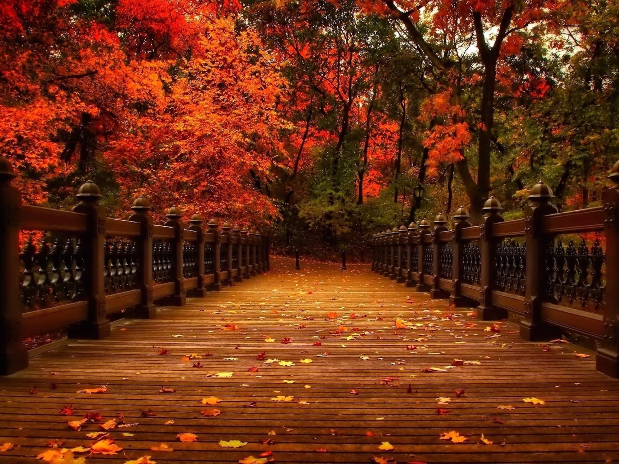 Autumn Park Bridge Wallpaper
