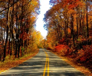 Autumn Road HD Wallpaper