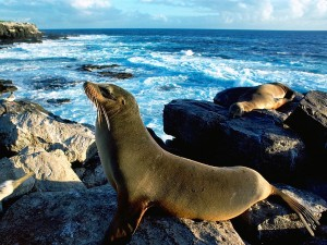 Sea Lion Sunbathing Wallpaper