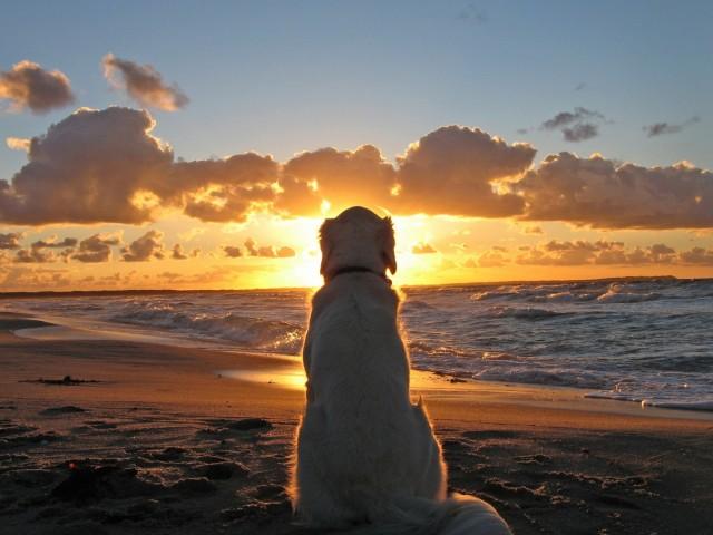 Dog Reflects Wallpaper