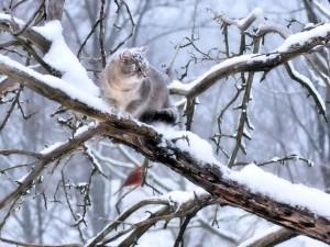 Snowy Cat Wallpaper