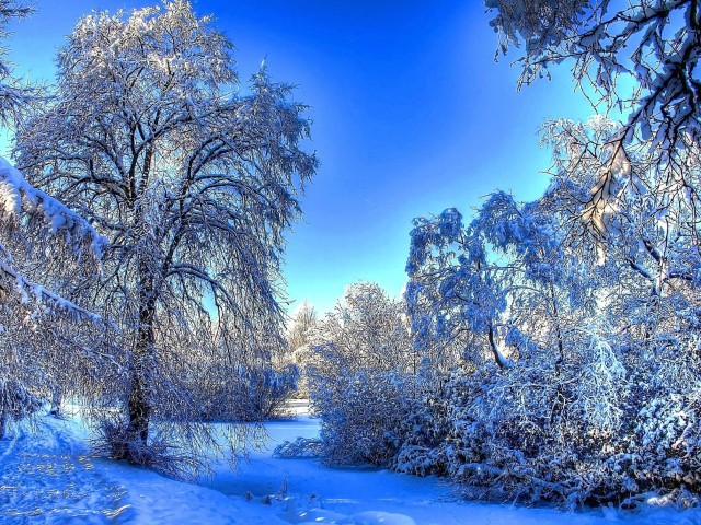 Snowy Trees HD Wallpaper