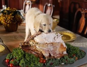 Thanksgiving Puppy Dinner Wallpaper