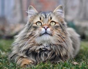 Precious Cat Wallpaper