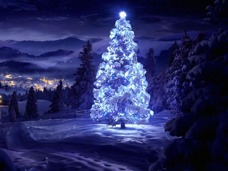 Snowy Christmas Tree Wallpaper Free Hd Downloads