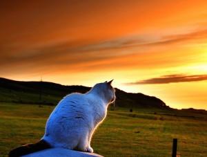 Cat Reflects Wallpaper