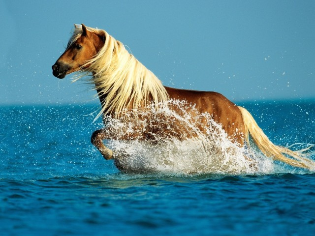 Palomino Horse HD Wallpaper
