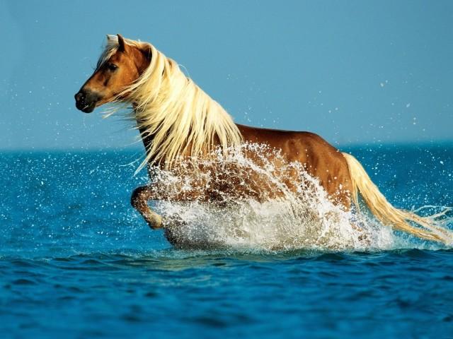 Palomino Horse HD Wallpaper